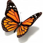 Butterfly Wings Strategy